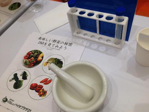 野菜のDNA