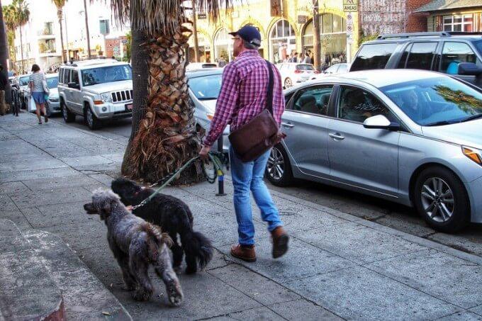 カリフォルニア犬