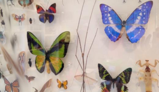 昆虫好きキッズ向けの穴場博物館!ファーブル昆虫館「虫の詩人の館」@文京区千駄木