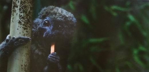 東京で楽しむ夜の動物園♪上野動物園のナイトズー(2019.夏)をレポート!